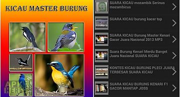 Video kicau master burung