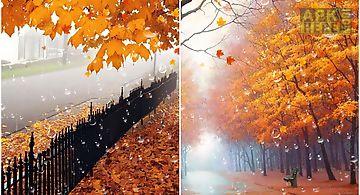 Maple droplets  Live Wallpaper