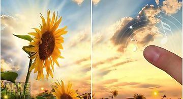 Sunflower sunset Live Wallpaper