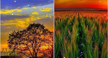 Sunset spring Live Wallpaper
