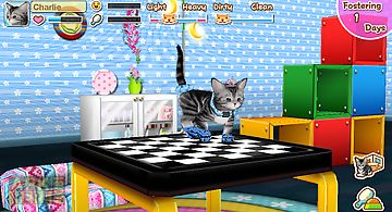 My cat my room