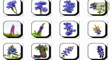 Bluebonnet flowers onet classic ..