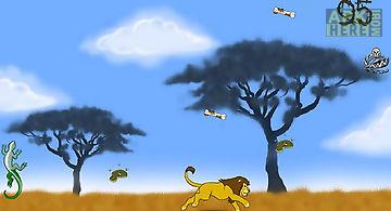 Lion, the king of wild savanna