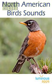 north american birds free