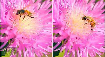 Bee on a clover flower 3d Live W..