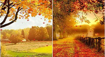 Falling leaves by top  Live Wall..