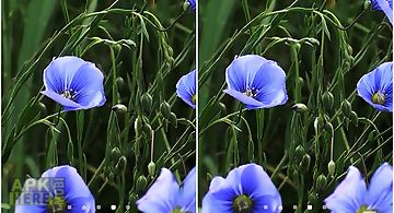 Blue flowers by jacal video  Liv..