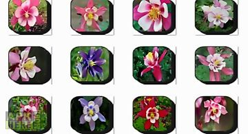 Columbine flowers onet classic g..