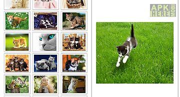 Cat wallpapers!