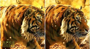 Free Live Tiger Wallpaper