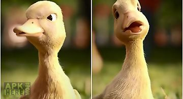 Talking duck Live Wallpaper