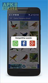 canto de pássaros brasileiros