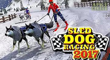 Sled dog racing 2017