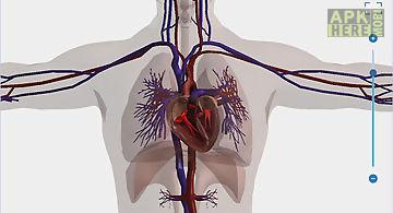 Human body anatomy 3d - free