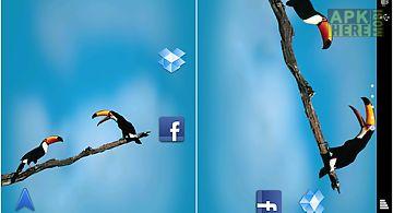Birds  app Live Wallpaper