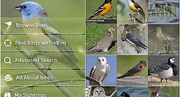Audubon birds of north america