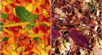 Autumn leaves 3d lwp Live Wallpa..