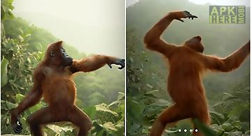 Dancing monkey Live Wallpaper