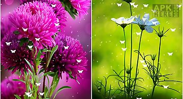 Flowers by stechsolutions Live W..