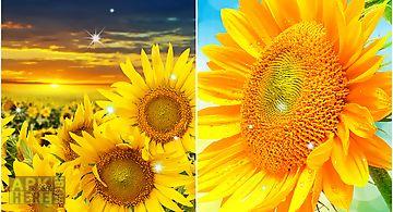 Sunflower by creative factory wa..