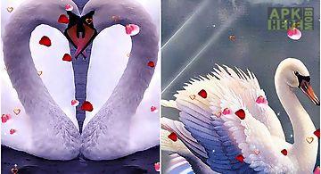 Swans: love Live Wallpaper
