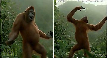 Wild dance crazy monkey Live Wal..