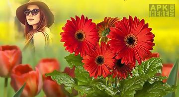 Hd photo frames - flowers