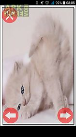 imagenes de gatitos