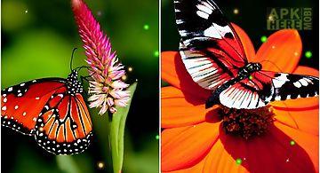 Best butterfly Live Wallpaper