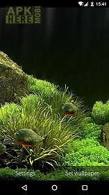 Fish Aquarium 3d Live Wallpaper