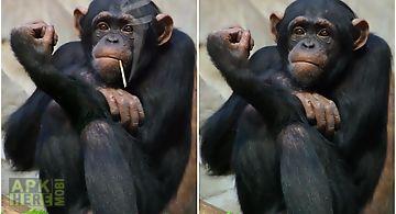 Funny monkey  Live Wallpaper