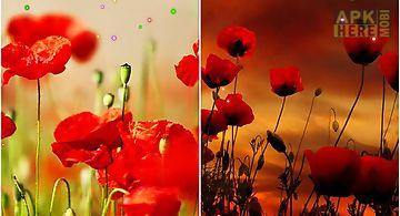 Poppy fields Live Wallpaper