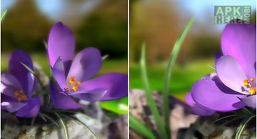 Nature live: spring flowers 3d L..