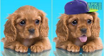 Sweet dog, puppy, dress up