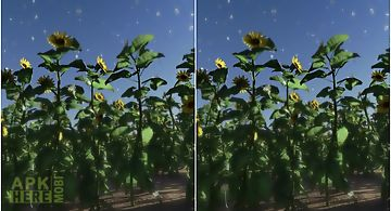 Sunflowers downhill live wallpap..