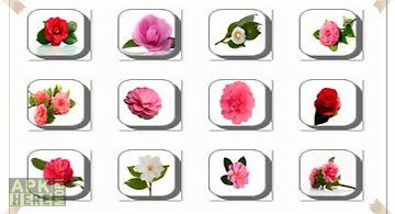 Camellia flowers onet classic ga..