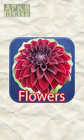 flowers quizes