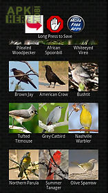classic bird calls
