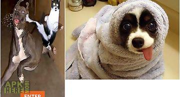 Free funny animals videos