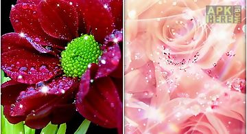 Shiny flowers Live Wallpaper