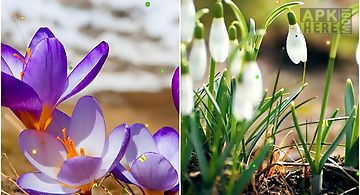 Early spring: nature Live Wallpa..