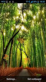 forest by pro  live wallpaper