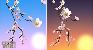Lovely sakura  Live Wallpaper