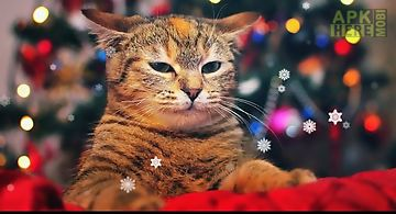 X-mas cat Live Wallpaper