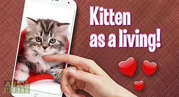 Pat cute kitten