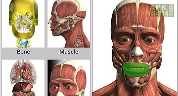 Speed anatomy quiz free for Android free download at Apk Here store ...