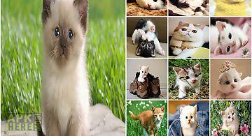 Cat wallpapers cute