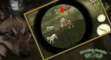 Hunting jungle wolf