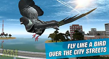 City bird pigeon simulator 3d