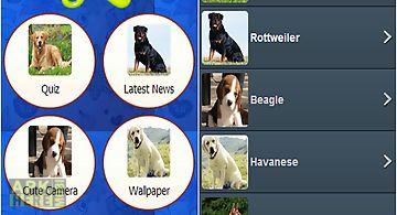 Dog breed quiz - dogs guide trai..